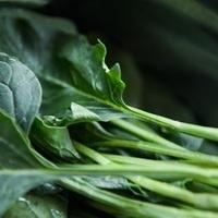 Online Workshop: Vegetable Gardens Part III-Fall Crops