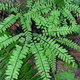 Self-guided Walkabout: Finding Ferns and Their Friends