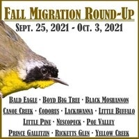 Fall Migration Round-Up 2021