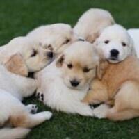 Pet-A-Puppy