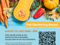 Edible Garden Series: Fall Vegetables