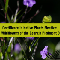 Class: Fall Wildflowers of the Georgia Piedmont (Certificate in Native Plants Elective)