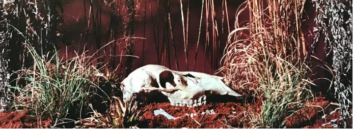 Natural History/Critical Condition Art Exhibition