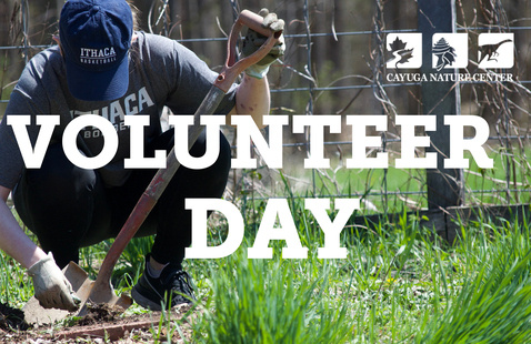 Cayuga Nature Center Volunteer Day
