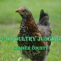 4-H Poultry Judging Practices