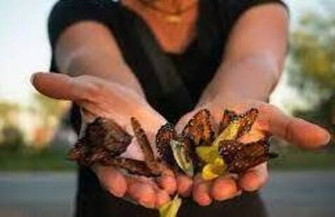 close up of woman holding butterflies in her hand