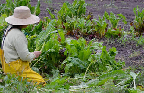 PERSON WORKING IN FARM FIELD