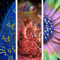 Left: Marek Mis, Damselfly Caudal Gill, 2007, detail; center: Edmond Alexander and Cynthia Turner, T Cell Activation and Tumor Attack, 2017, detail; right: Don Komarechka, Sunflower Illuminated with UR Radiation, 2018, detail