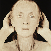 Jane Goodall, 67, From Wise Women: A Celebration of Their Insights, Courage, and Beauty Joyce Tenneson 2000 Archival pigment print Gift of David and Jennifer Kieselstein in Memory of Max and Vicki Kieselstein