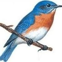 Of Bluebirds and Bluebird Boxes