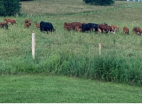 Grazing Systems Workshop for Military Veterans
