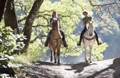 Gray Fund Outdoors: Horseback Trail Ride