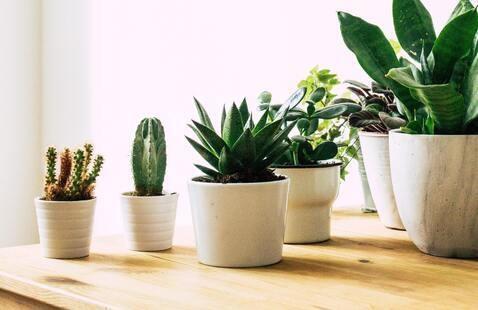 Various succulent plants arranged in white planet pots