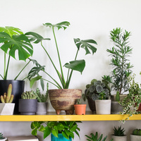 LUNCH BREAK: Plants for the People