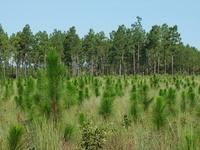 Lexington County Forest Landowner Association