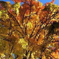 Fall Term Begins