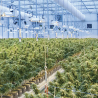 Research in Action: Tips to Nip Cannabinoid-Related Deaths in the Bud