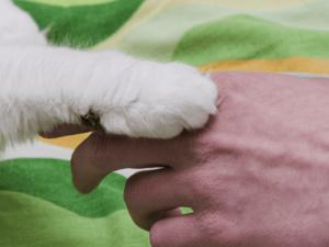Pet Memorial Sunday at the Baltimore Humane Society