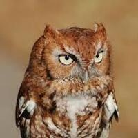 Owl Prowl at North Shore
