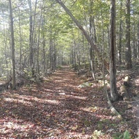 Discover Ricketts Hike