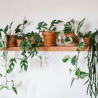 Houseplants 101, presented by Linda Newsome, Kent County Master Gardener