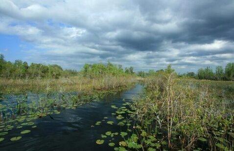 Coastal Wetland Transformations