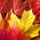 Take & Make: DIY Autumn Leaf Bowls