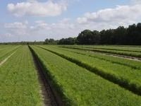 Orangeburg-Calhoun Forest Landowner Association