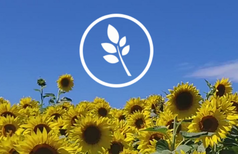 Center for Wellness logo with sunflowers