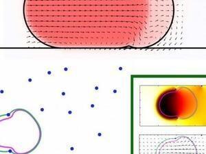 3D Cell Migration