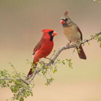 Backyard Bird Walk