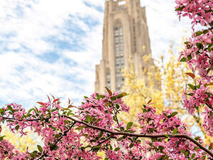 Spring Cathedral