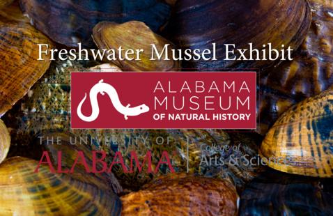 Freshwater Mussel Exhibit