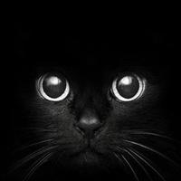 Black Cat Week 2021: Sophomore Class Party