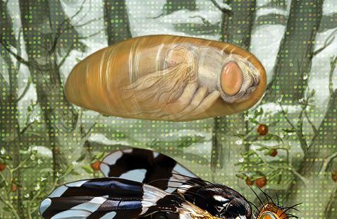 Fly and Larva photo