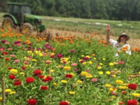 Flower Field with person and tractor