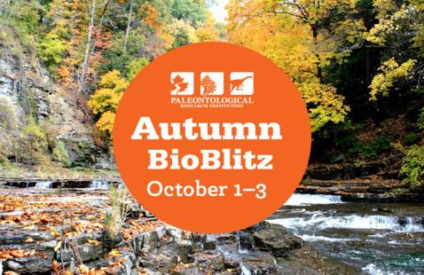 Autumn BioBlitz