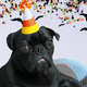 和派对小狗马蒂一起过万圣节