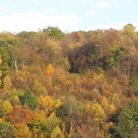 Fall Foliage Hike 2