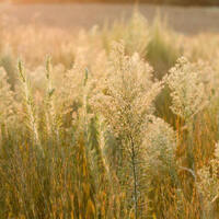 Tuesday Gardening Series: The Ornamental Grass Toolbox