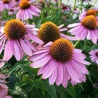 Garden Commons Workshop: Medicinal Plants