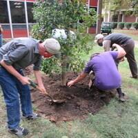 Arbor Day Tree Planting Workshop