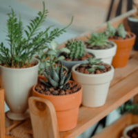 Houseplant Horticulture