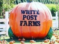 White Post Fall Farm Festival