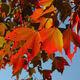 Fall Colors Hike