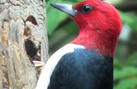 Bird Feeding, Potato Creek State Park