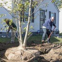 Green Heart South Louisville Tree Planting