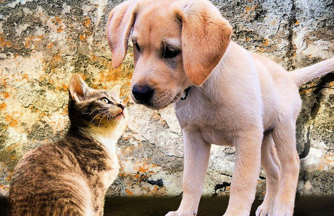 Puppy and kitten looking at each other outside.