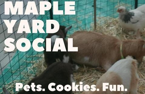 """Baby goats and chickens on straw behind """"Maple Yard Social, Pets. Cookies. Fun."""" text"""