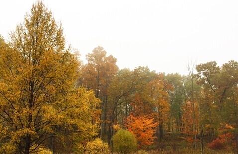 Fall at Pokagon State Park